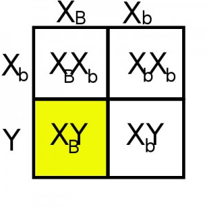 X-linked chi square
