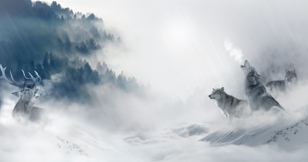 Wolf in the fog