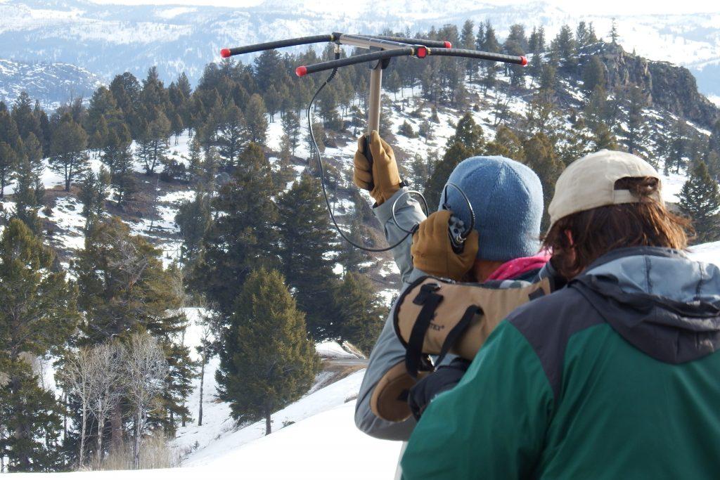 Yellowstone Wolf Project